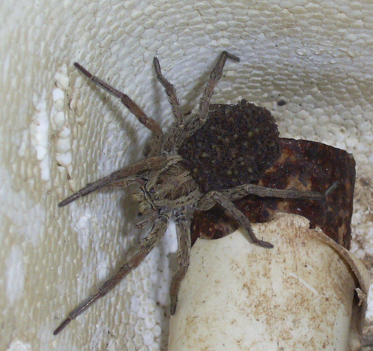 Insecte Salle De Bain Volant ~ les petites b tes de la maison et du jardin